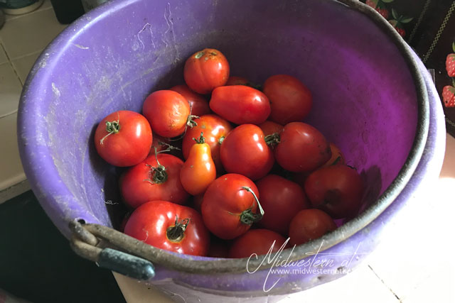 Midwestern at Heart: Bucket of Tomatoes