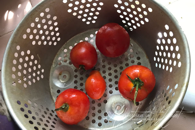 Midwestern at Heart: Tomatoes in strainer getting ready to remove skins